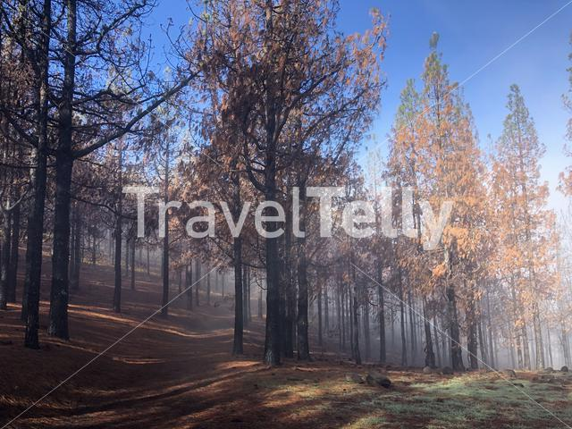 Misty Hiking path through burned forest on Gran Canaria