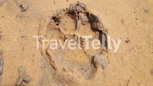 Footprint from wildlife in Bao Bolong Wetland Reserve a National park in Gambia, Africa