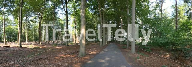 Panorama from a road through the forest around Wesepe, Overijssel The Netherlands