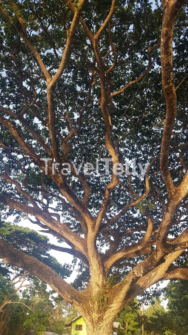 Branches of tree along the road