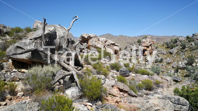 Rock formation at Cederberg Wilderness Area in South Africa