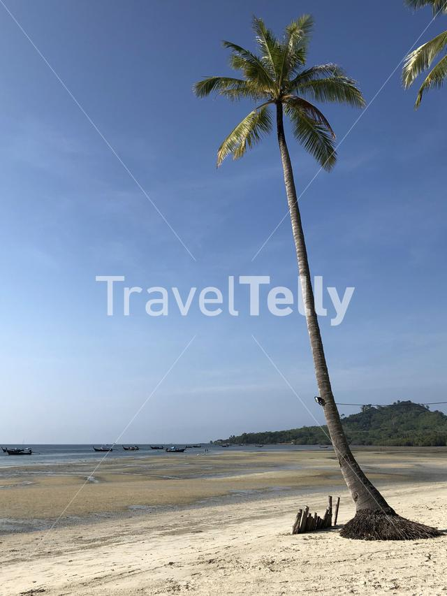 Palm tree at the beach on Koh Mook island in Thailand