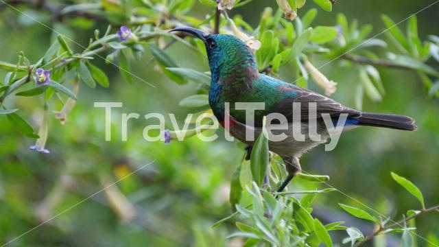 Hummingbird in a tree at Baviaanskloof in South Africa