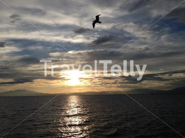 Sunset at the Aegean Sea with a gull silhouette in Greece