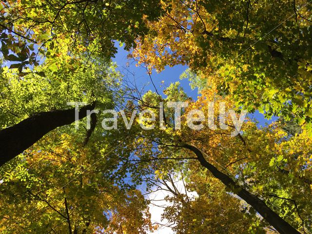 Forest at tampa mountain during autumn in Brasov Romania