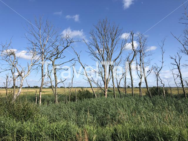 Trees around Offingawier in Friesland The Netherlands