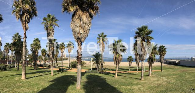 Palmtrees around Forum beach in Barcelona, Spain