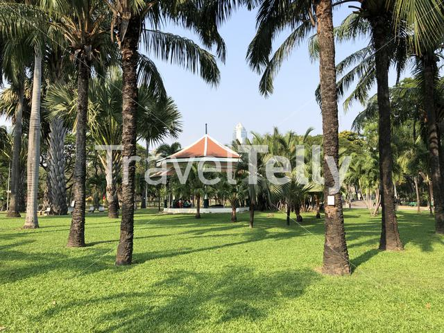 Palmtrees at Lumphini Park in Bangkok, Thailand