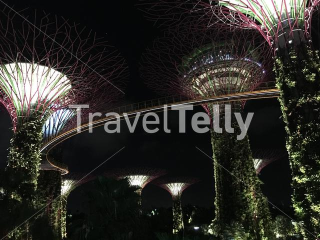 Supertree Grove skywalk in the evening at Gardens by the Bay in Singapore