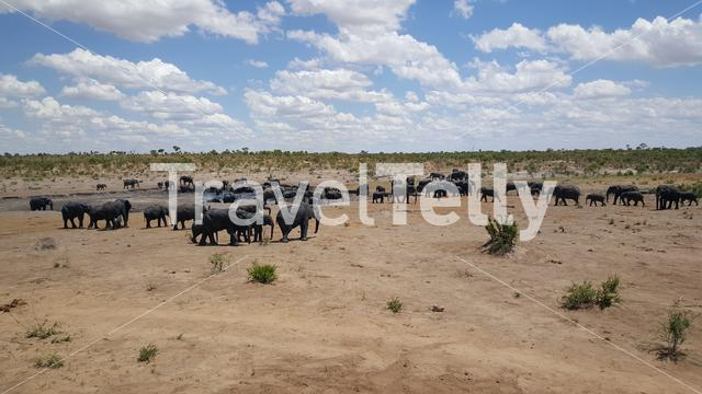 Herd of elephants around a waterpool at Khaudum National Park in Namibia