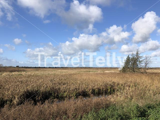 Nature reserve around Nijetrijne in Friesland, The Netherlands