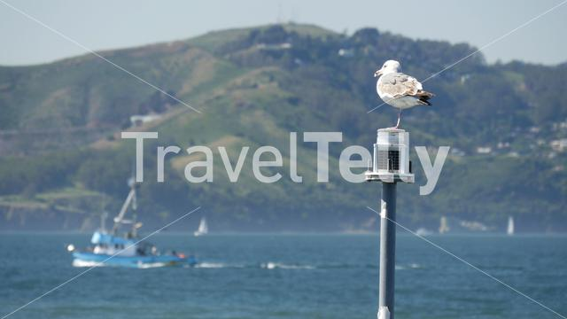 Gull sitting on a lantern with a fishing boat passing by at the background in San Francisco