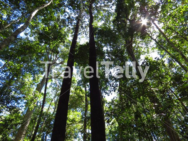 Sunshine shining through the trees in the forest of Noosa National Park Australia