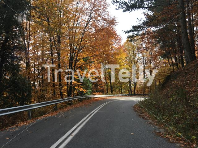 Driving through an autumn forest in Greece