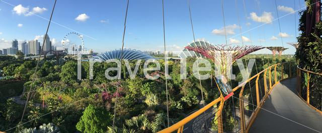 Panorama from the Flower dome and Singapore Flyer seen from Supertree Grove at the garden by the bay in Singapore