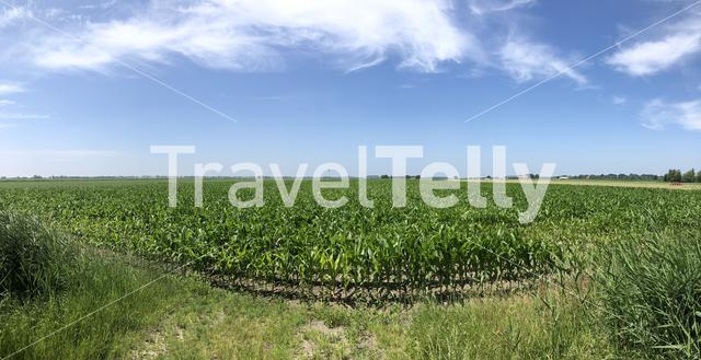 Panorama from farmland around Doniaga in Friesland The Netherlands