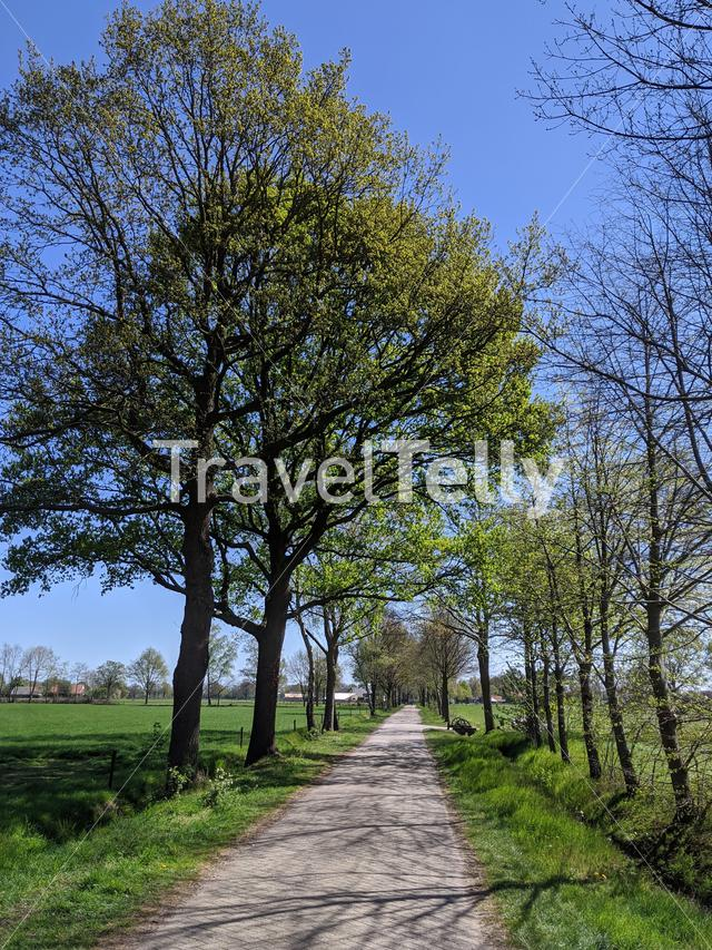 Road around Halle during spring in Gelderland, The Netherlands