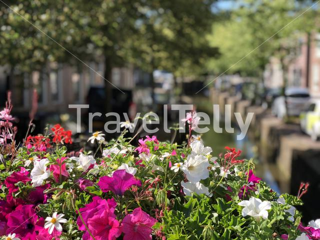 Flowers around a canal in Bolsward, The Netherlands