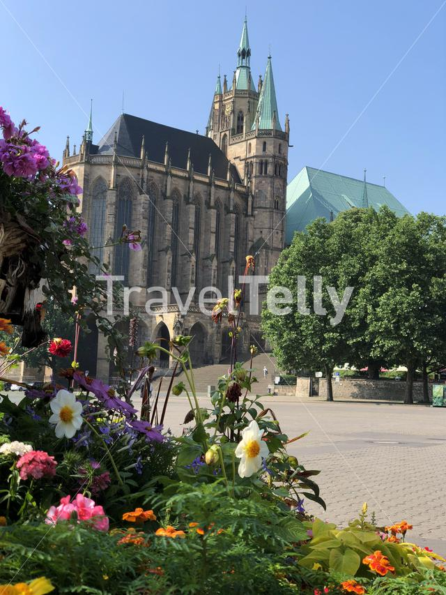 Flowers in front of the Erfurt Cathedral in Erfurt, Germany