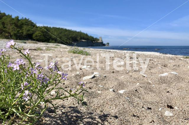 Beach around Lickershamn in Sweden