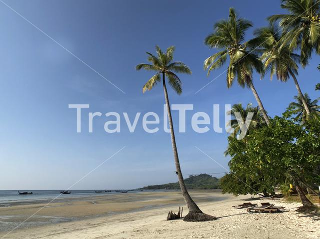 Palm tree at beach on Koh Mook Thailand
