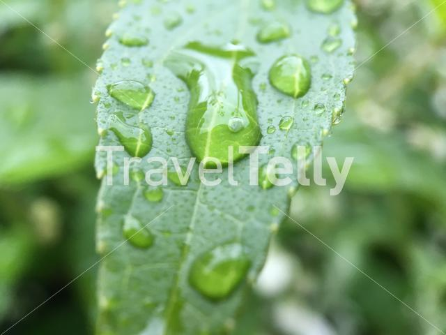 Water drops on a leaf in The Netherlands