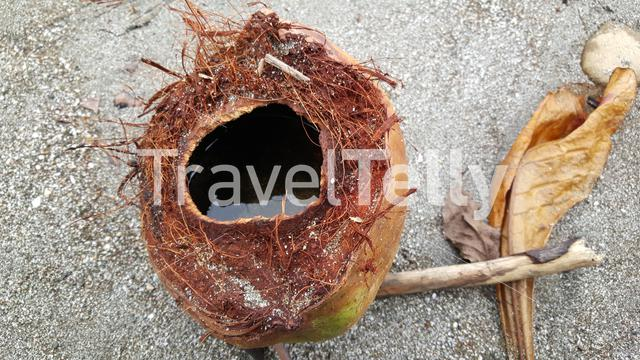 Close up from water in a coconut at the beach of Montezuma Costa Rica