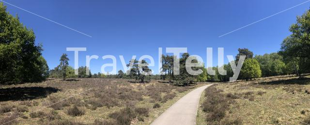 Panorama from a path through National Park De Hoge Veluwe in Gelderland, The Netherlands