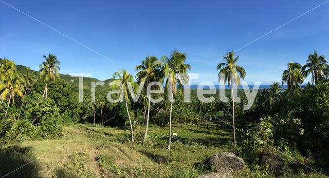 Farm land with palmtrees panorama in the hills of Anda Bohol the Philippines