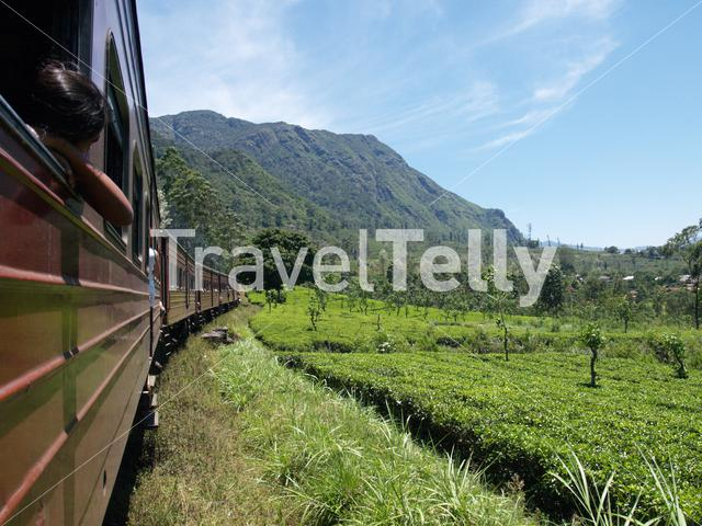 Train ride through the tea plantations on the way to Kandy in Sri Lanka