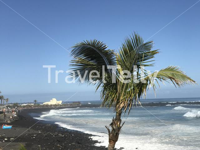 Palmtree at the beach of Puerto de la Cruz Tenerife canary islands