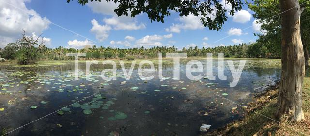 lake landscape panorama with palmtrees in Sri Lanka