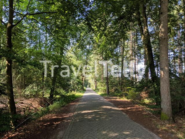 Road through the forest around Wesepe, Overijssel The Netherlands