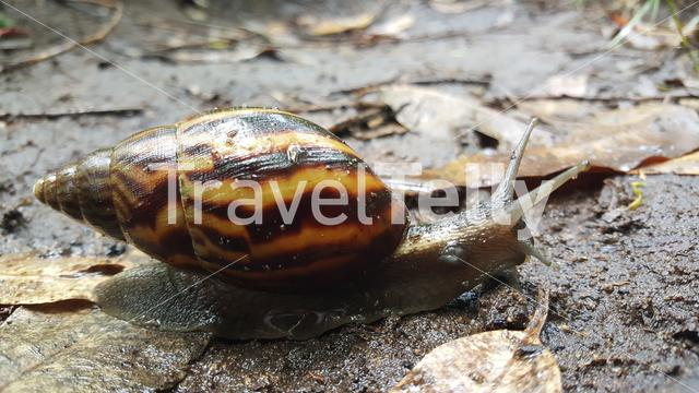 Close up from a snail on the ground