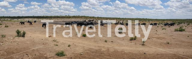 Panorama from a herd of elephants around a waterpool at Khaudum National Park in Namibia