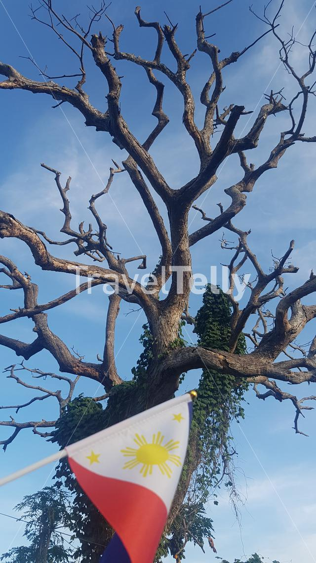 Branches of tree during hot summer season