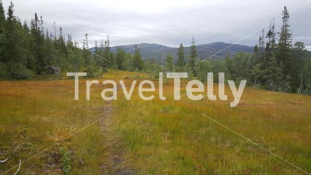 Autumn landscape in Borgefjell National Park Norway