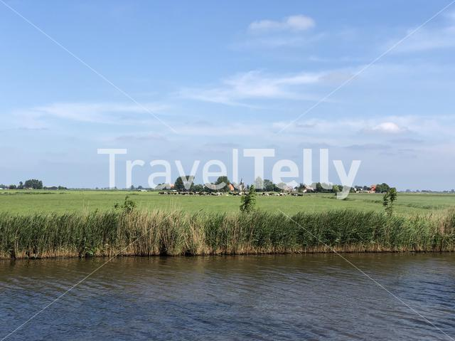 Landscape with cows and the village Hieslum in Friesland The Netherlands