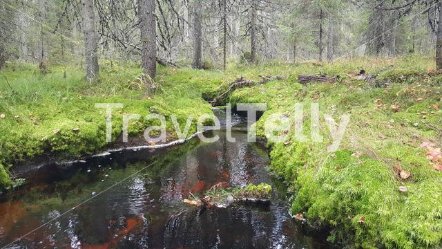 Small river in the forest of Patvinsuo National Park Finland