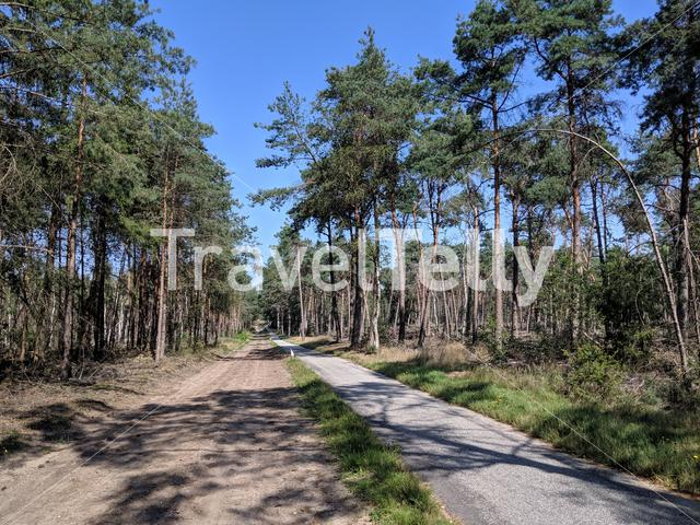 Cycle path through the forest at the Sallandse Heuvelrug in The Netherlands