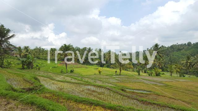 View over rice terraces in Indonesia