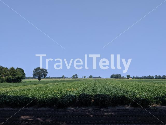 Farmland around Raalte, Overijssel The Netherlands