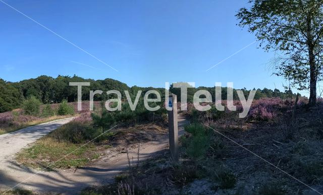 Panoramic Landscape from a MTB path at the National Park Sallandse Heuvelrug in The Netherlands
