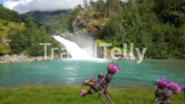 Spider at a purple flower with a waterfall in the background at Morkidsdalen park Skjolden Norway