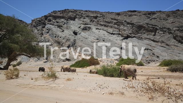 Herd of elephants at Hoanib riverbed in Nambia