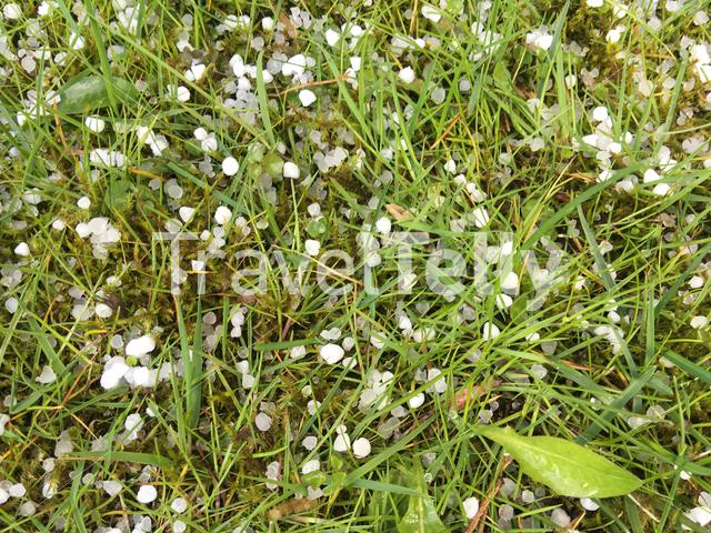 Hail in grass in The Netherlands