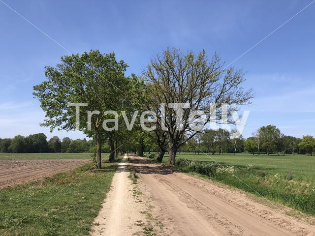 Bicycle path towards Beckum in The Netherlands