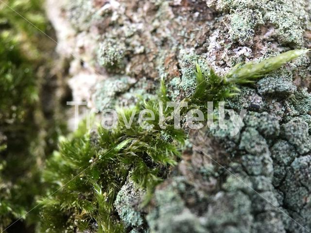 Moss on a tree in The Netherlands