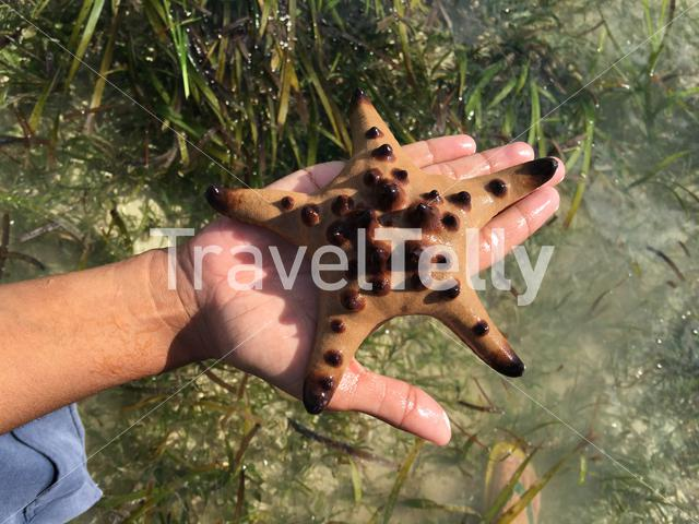 Sea star on a hand in  Panglao, Bohol the Philippines