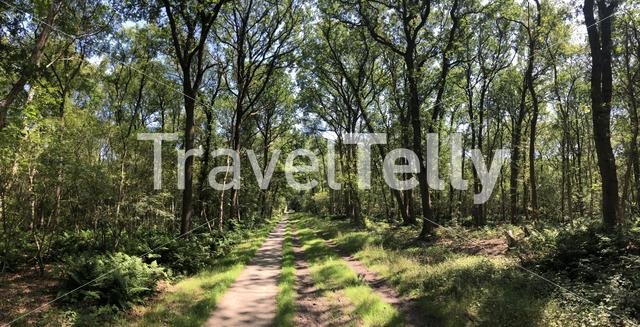 Bicycle path through the forest around Heemserveen in Overijssel, The Netherlands